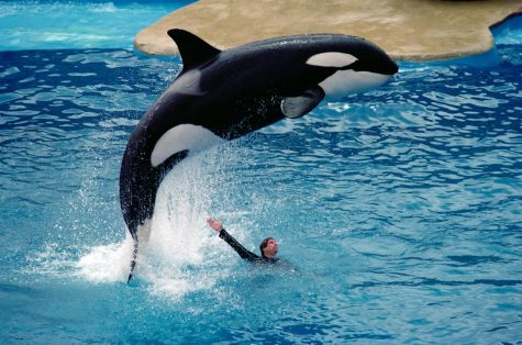 Should SeaWorld be Shut Down?
