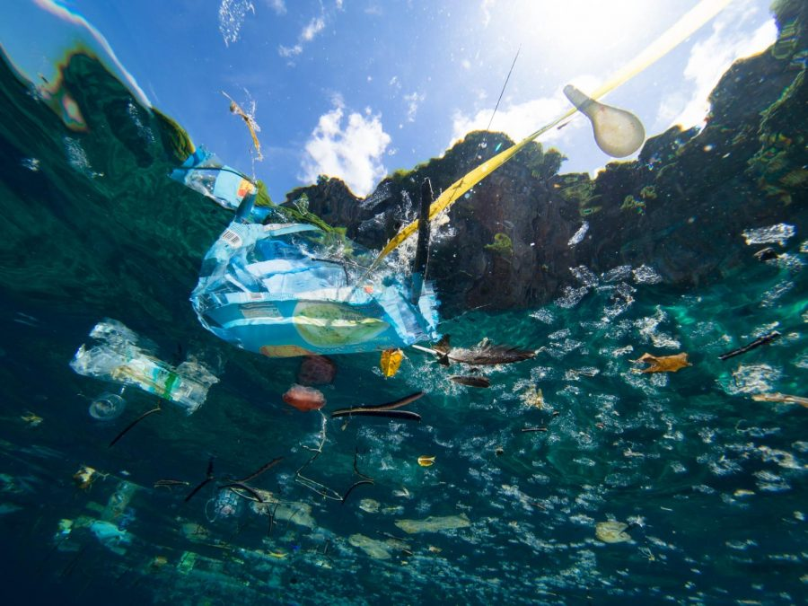 Pieces+of+plastic+floating+in+the+ocean
