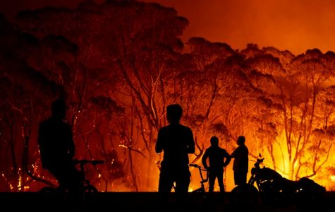 The Devastation of Australia's Wildfires