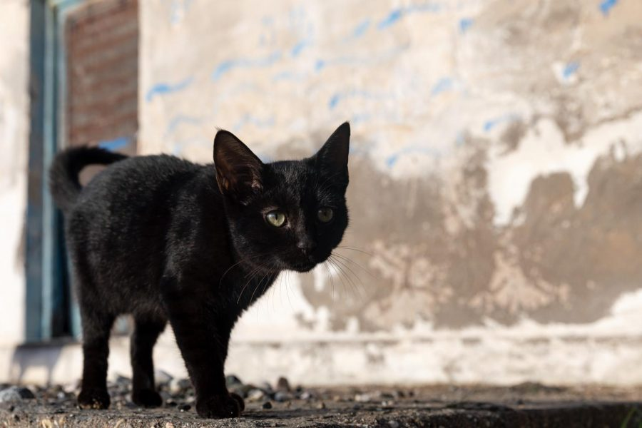 Are Superstitious Beliefs Logical?